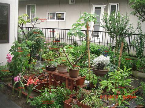 home garden  japan japanese garden