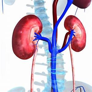 Kidney Pain  What U0026 39 S Behind It