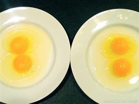 backyard eggs backyard eggs vs store bought eggs a side by side
