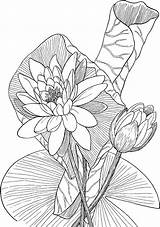 Coloring Pages Water Lily Printable sketch template