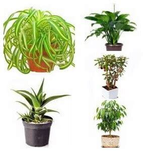 indoor plants low maintenance house plant types categories of indoor plants