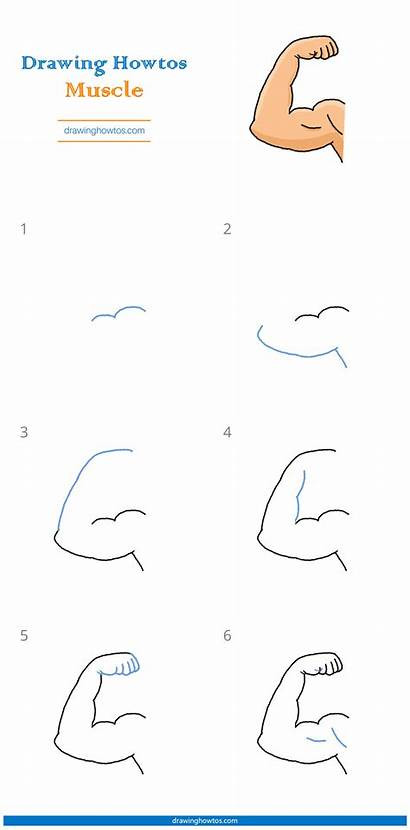 Drawing Muscle Draw Easy Step Muscles Pdf