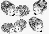 Coloring Porcupine Designlooter sketch template