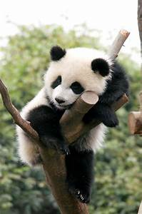 Sleeping Panda | Where the Wild Things Are | Pinterest