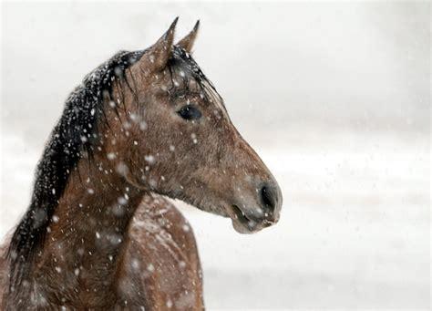 photo horse portrait animal nature  image