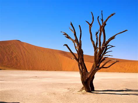 Deadvlei Salt Pan, Namibia, Africa