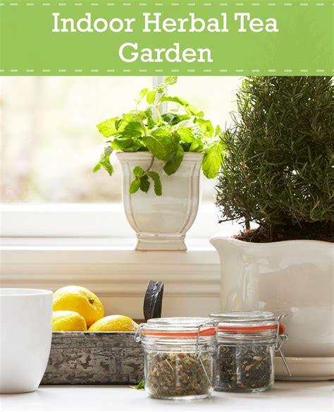 Make An Indoor Tea Garden This Winter  Indoor Garden