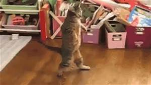 STRANGE CAT FUN - THIS GOOFY CAT WALKS ON ITS HIND LEGS ...