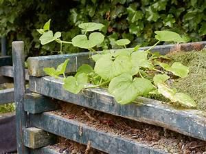 Quand Planter Lavande Dans Jardin : quand et comment planter courges et potirons ~ Dode.kayakingforconservation.com Idées de Décoration
