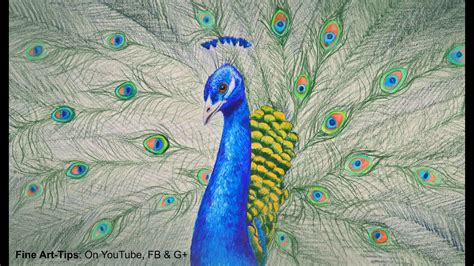 draw  peacock  color pencils drawing feathers  birds youtube