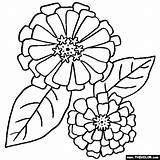 Coloring Pages Zinnia Flower Zinnias Flowers Border Sheets Drawing Colouring Printable Thecolor Drawings Patterns Pattern Easy Line Mandala Rose Embroidery sketch template