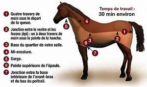 Tondre La Pelouse Sans Ramasser : quelle tonte pour mon cheval ~ Melissatoandfro.com Idées de Décoration