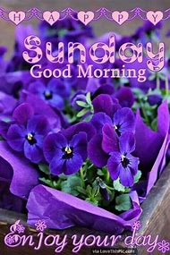 Best Good Sunday Morning Ideas And Images On Bing Find What You