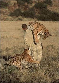 Best Images About Love Tigers Pinterest Golden