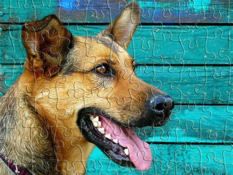 cute dog jigsaw puzzle