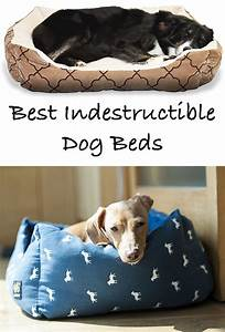Reviews of the best indestructible dog beds for extreme for Non destructive dog bed