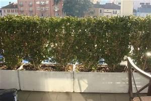 Buxbaum Schneiden Wann : wann buchs schneiden buchs wann und wie schneiden buchs ~ Lizthompson.info Haus und Dekorationen