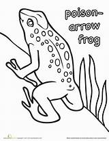 Frog Poison Coloring Arrow Dart Pages Rainforest Frogs Worksheet Education Animal Worksheets Draw Animals Sheets Toad Reptiles Crafts Designlooter Craft sketch template