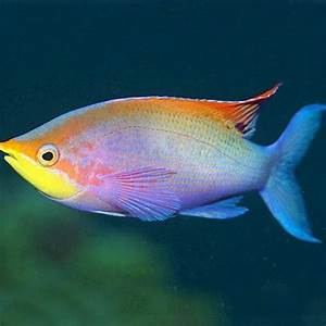 Rare Fish available from our aquarium store -Amazing Amazon
