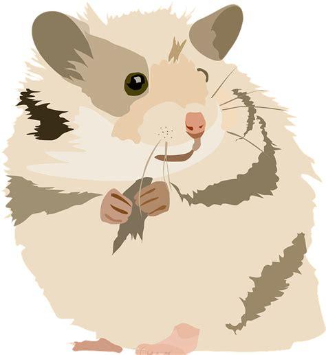 hamster cute sweet  image  pixabay