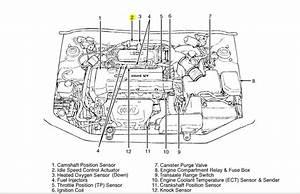 2000 Hyundai Tiburon Radio Wiring Diagram Schematic Diagram Architects Desamis It