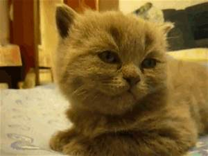 Tired Kitten GIFs - Find & Share on GIPHY