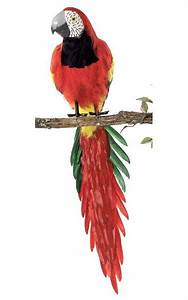 "46"" Red Head Macaw - Multi-Colored Bird"