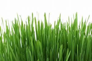 Rasen Düngen Wässern : rasen d ngen im fr hjahr eine anleitung garten mix ~ Markanthonyermac.com Haus und Dekorationen