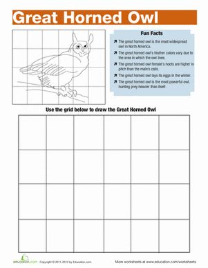 great horned owl facts worksheet education