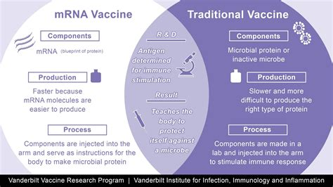 Do this by sending genetic instructions directly into. How mRNA vaccines from Pfizer and Moderna work, why they're a breakthrough and why they need to ...