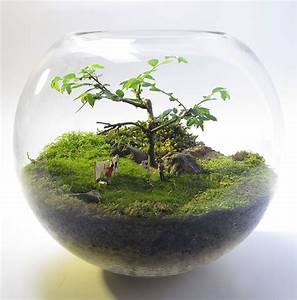 Bonsai Im Glas : diy naver ~ Eleganceandgraceweddings.com Haus und Dekorationen