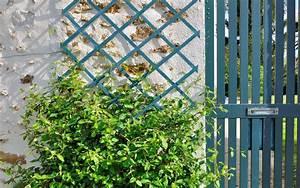 Treillage Plante Grimpante : comment installer un treillage dans un jardin ~ Dode.kayakingforconservation.com Idées de Décoration