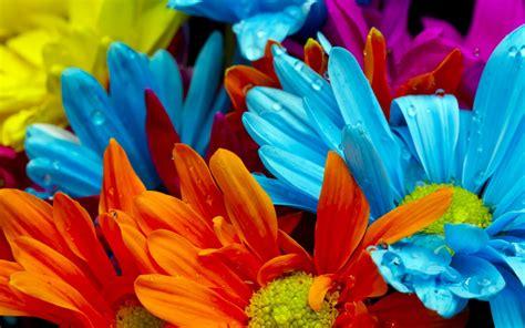 flower colors 21 super vibrant wallpapers