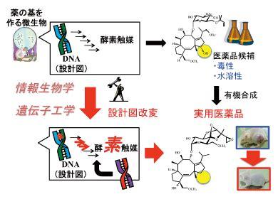 ペニシリン の 原料