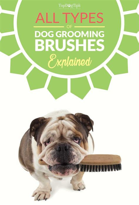 best grooming types of grooming brushes and their uses top tips