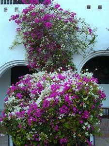 Blühende Hecke Schnellwachsend : bl hende hecke arabella azur resort in hurghada holidaycheck hurghada safaga gypten ~ Whattoseeinmadrid.com Haus und Dekorationen