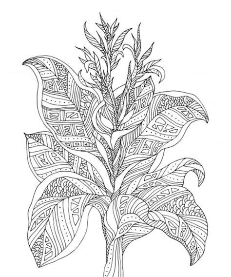 pflanzen ausmalbilder fuer erwachsene kostenlos zum