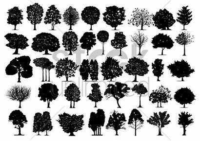 Silhouette Types Different Tree Stockunlimited Graphic