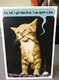 Funny Cat Happy Birthday Cards