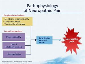 Overview Of The Pathophysiology Of Neuropathic Pain
