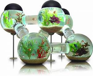 Confuse Your Pet Fish With the Labyrinth Aquarium