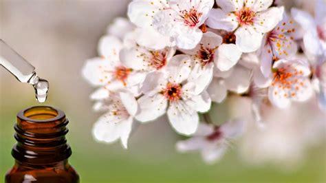 fioro di bach corso operatore fiori di bach novembre 2016 csenfirenze
