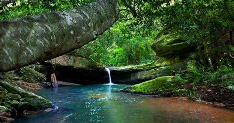 River Forest Moss Waterfall Australia Shrubs Nature