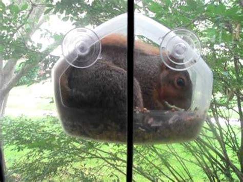 squirrel stuffs   window bird feeder youtube