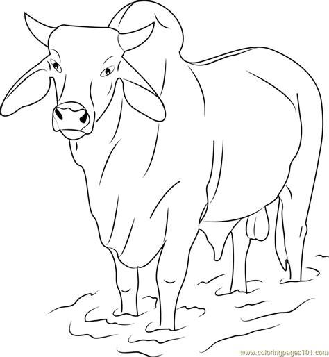 Coloring Pages Of Bulls - Eskayalitim