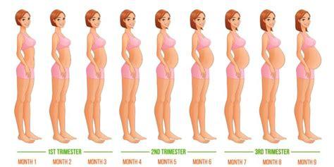 Janin Usia 2 Bulan 20 Istilah Seputar Kehamilan Yang Perlu Diketahui Biar