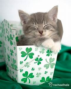 1000+ images about St Patrick's day on Pinterest | Cats ...