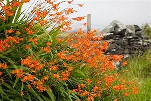 Winterharte Pflanzen Liste : winterharte pflanzen liste die besten 17 ideen zu winterharte pflanzen auf pinterest ~ Eleganceandgraceweddings.com Haus und Dekorationen