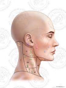 Neck Lymph Node Regions