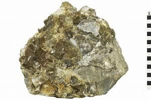 Sedimentary Rock Limestone   Q?rius